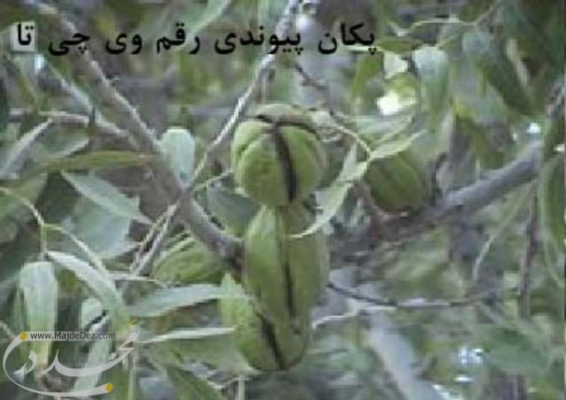 safiabad.dezfol00004